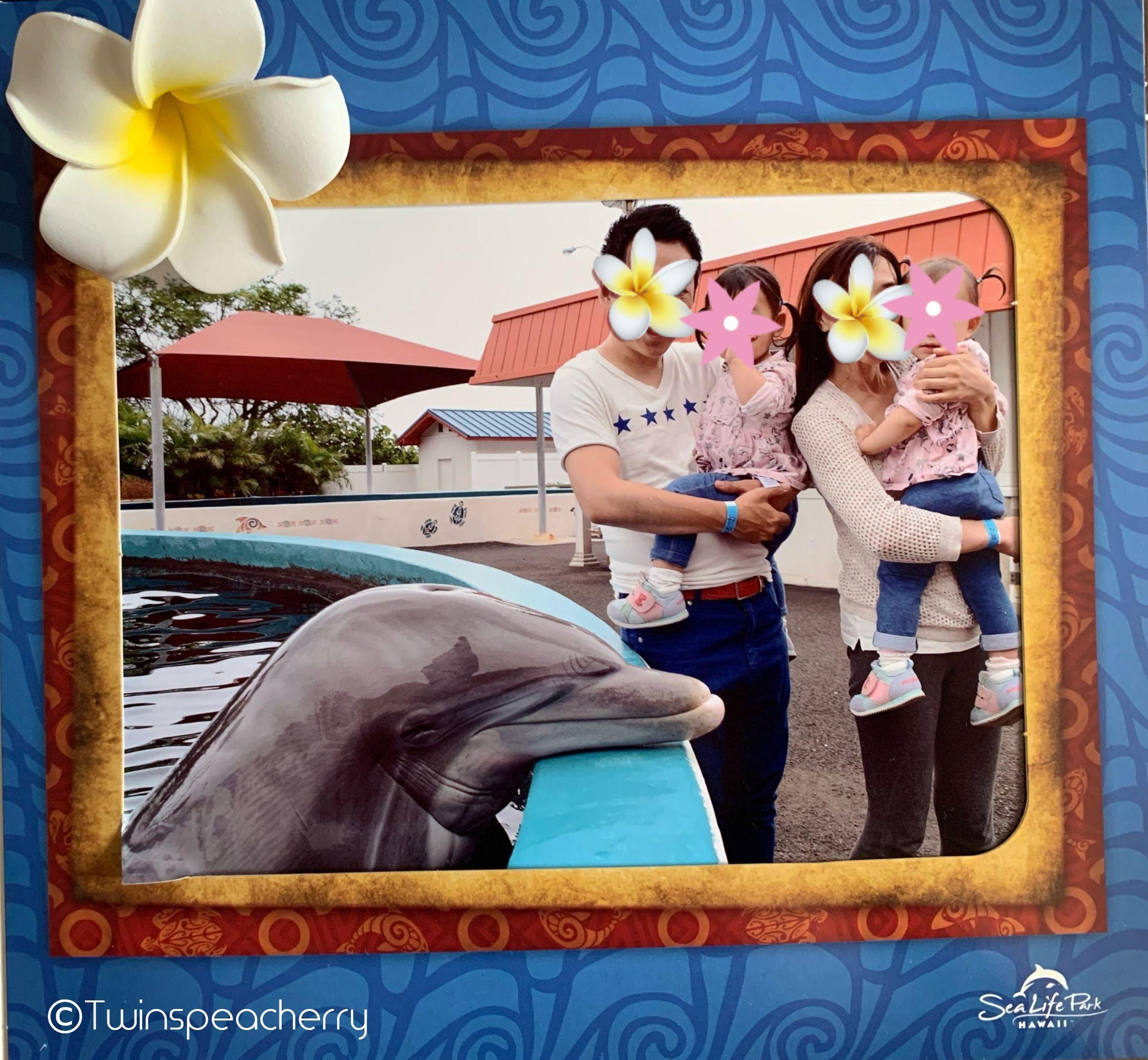 Sea Life Park(シーライフパーク)ドルフィン・アロハ(Dolphin・aloha)|幼児(双子2歳)とハワイ オアフ島 旅行